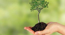 A Educação ecológica segundo Francisco