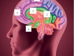 Quais os benefícios neurobiológicos da meditação