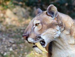O tigre-dente-de-sabre e a educação do futuro