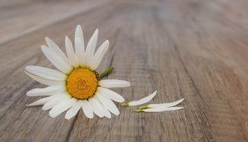 A dor do luto por suicídio: relato de um pai que perdeu o chão