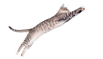 Uma fábula sobre quando o pulo do gato de um professor entusiasma os alunos
