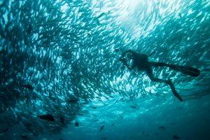 oceanos emitem mais oxigênio