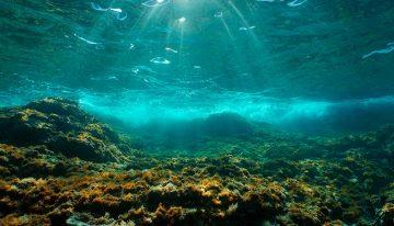 Currículo escolar precisa criar uma cultura oceânica, defende especialista